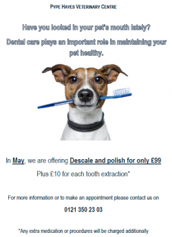 May 2015 Dental Offer
